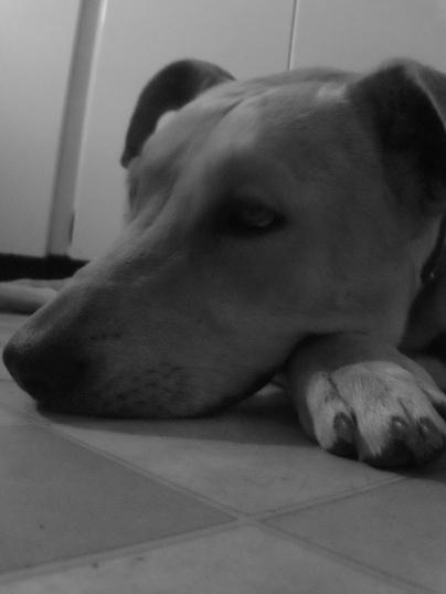 Pepper rests
