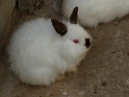 scary bunny!