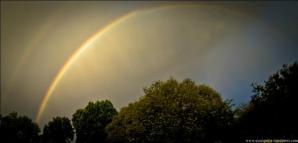rainbow pan