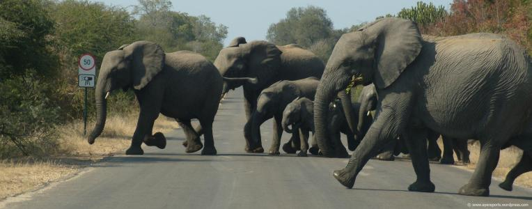 traffic blockers